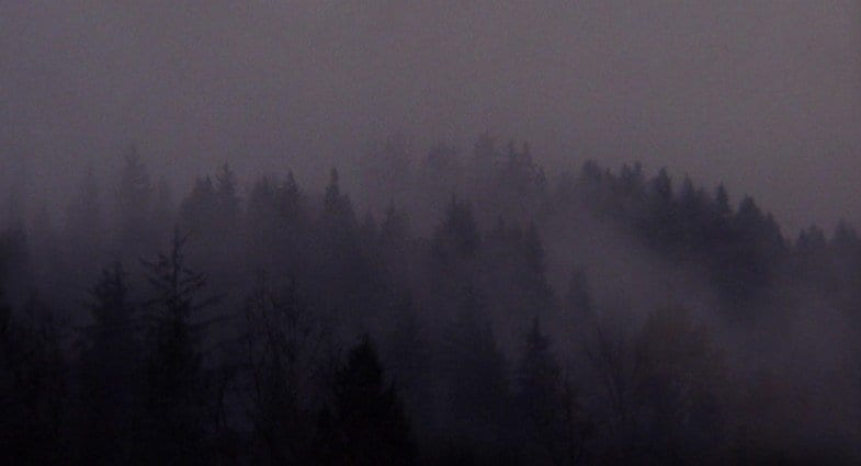 The ghostwood forest in Twin Peaks