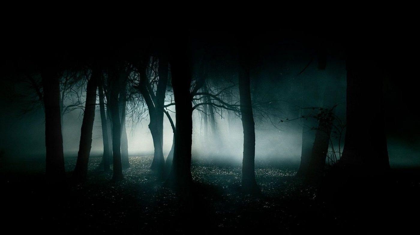 dark shadows surround trees