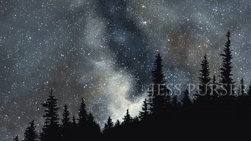 Art by Jess Purser, fir trees in the starry sky