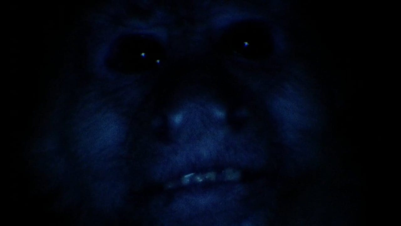 a monkey in dark blue light whispers Judy
