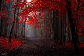 a beautiful footpath through trees with bright red leaves