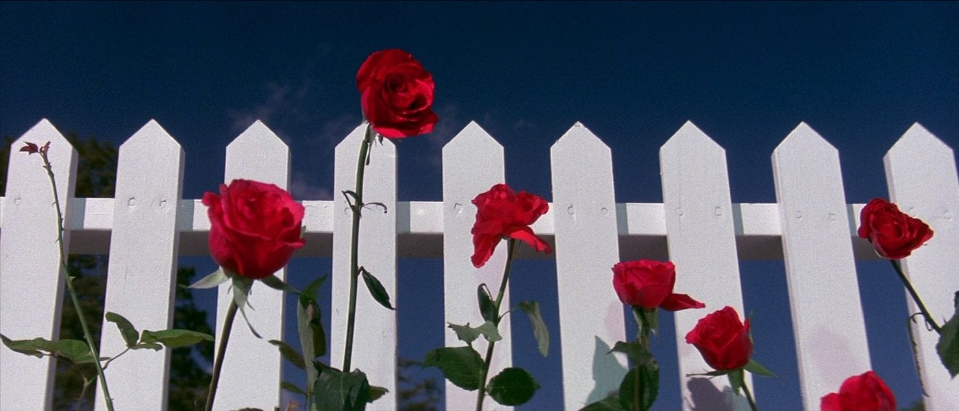 A white picket fence with red roses in front