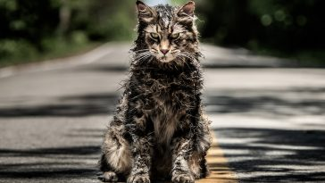 Church the cat sits alone on the road