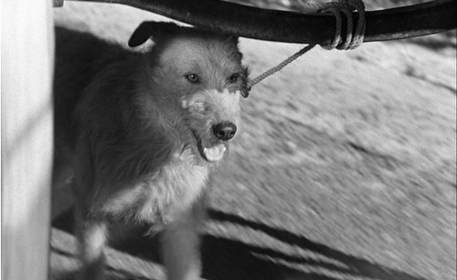 A dog is tied to a moving carriage.