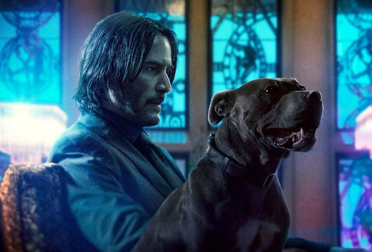 John Wick with his new dog in John Wick Chapter 3.