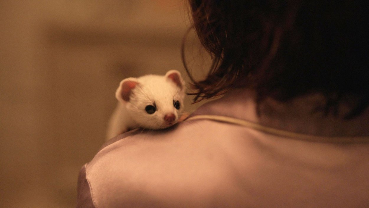 Pantalaimon, as a white ferret, peeping his head over Lyra's shoulder