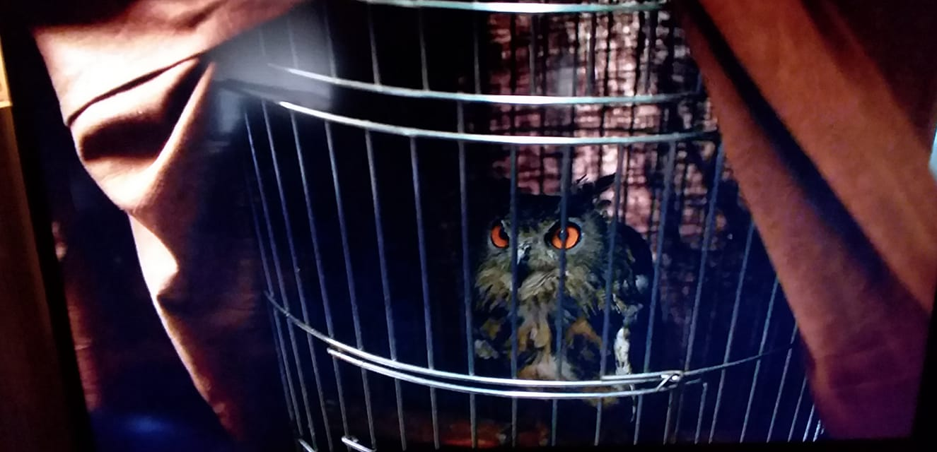 Laurie Blake's owl called Who in a cage