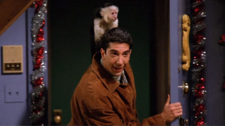 Ross Gellar stides into his sister's apartment with a tiny endearing monkey- named Marcel-on his back.