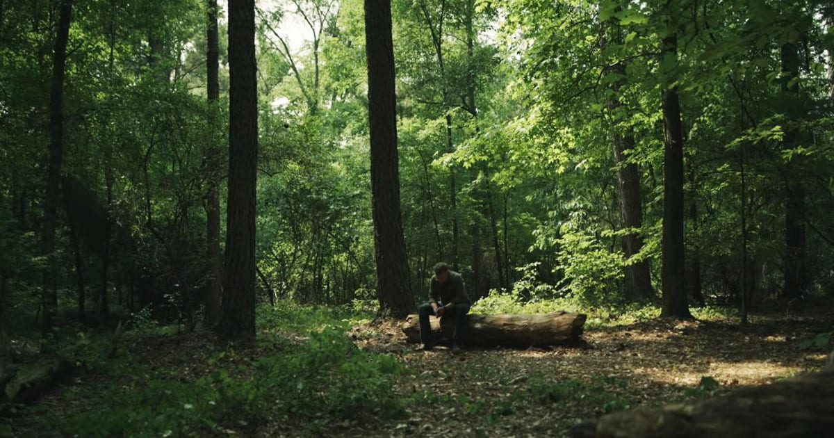 Jack sits on a log in the woods
