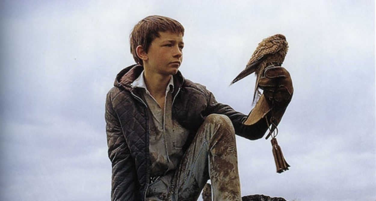 A young boy holds a kestrel in his hand