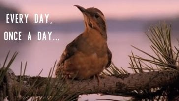 a bird sits on a branch with slogan, every day once a day