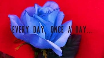 a blue rose on a red jacket