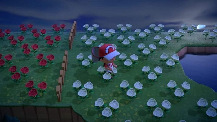 My character in Animal Crossing walking across a field of white roses.