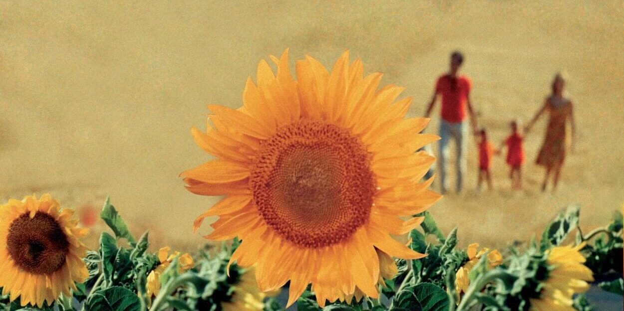 a sunflower in focus with a family walking hand in hand in the distance