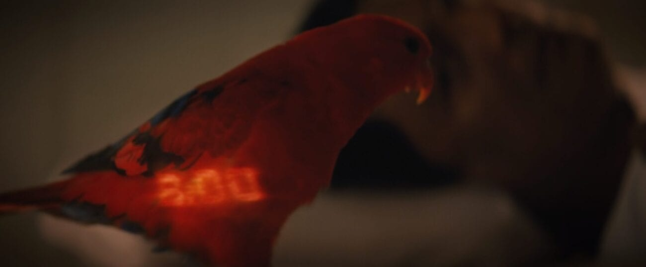 A red parrot close to the camera fills the frame and is the only thing in focus, the parrot has a digital clock display of 8:00 on it's feathers, Suhil;s (Adil Hussain) face is seen out of focus laying in the background
