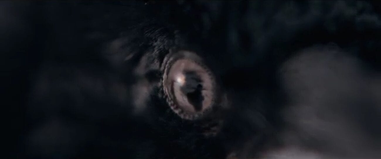 The Stand S1E7 - Zoom in on a crow's eye, a reflection of a hiker in its eye