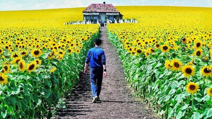 a man in a blue tracksuit walks down a path through a sunflower field towards a small house