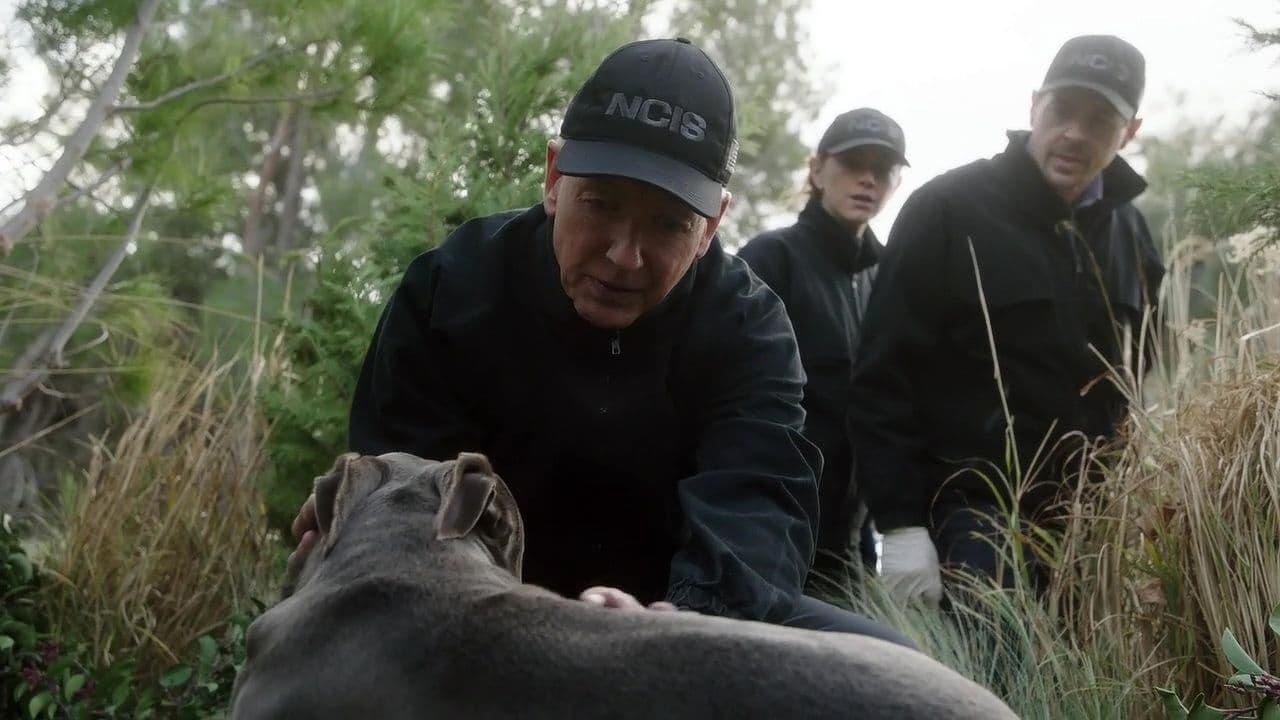 NCIS Agent Gibbs (Mark Harmon) Agent Bishop (Emily Wickersham) and Agent McGee (Sean Murray) find a wounded dog outdoors in the long grass
