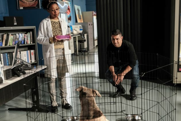 Agents Nick Torres and Kasie Hines (Wilmer Valderrama and Diona Reasonover) look at a injured dog as it rests in the office