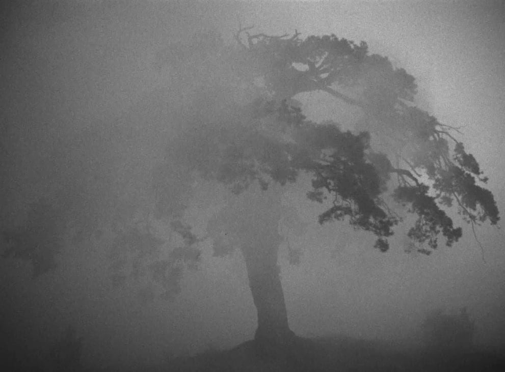 A picture of a tree shrouded in fog with dramatic lighting shot by Larisa Shepitko.