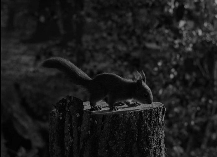 In this image from The Seventh Seal, a squirrel perches on a freshly-sawed tree stump.