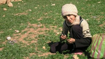A young girl named Tasnim gathering edible weeds to help feed her family